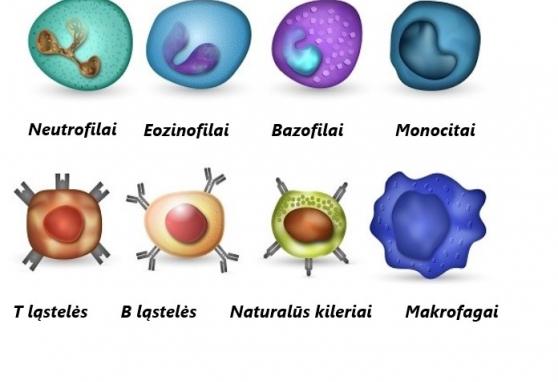 Imunoterapija – panacėja ar vienas iš vėžio gydymo būdų?